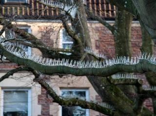tree-spike-1